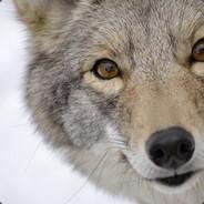 _Kojot